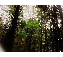Lone Maple Photographic Print