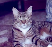 Crackers Our Frist Cat by mike421
