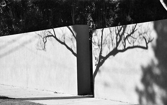 shadow tree by Karen E Camilleri