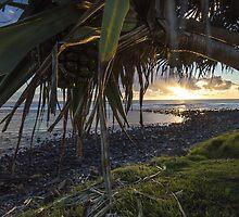 A Fruitful Pandanus Morning by Daniel Rankmore