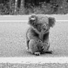 Koala Crossing The Great Ocean Road by Sama-creations