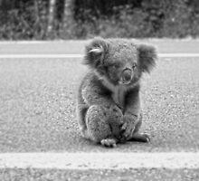 Koala Crossing The Great Ocean Road by Sama-creations