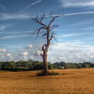 Dead Wood by Nigel Bangert