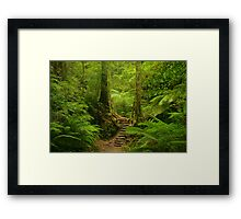 Magic Rainforest Framed Print