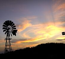 Country Gold - Near Toowoomba SE Qld Australia by Beth  Wode