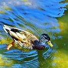 Just Ducky by marilyn diaz