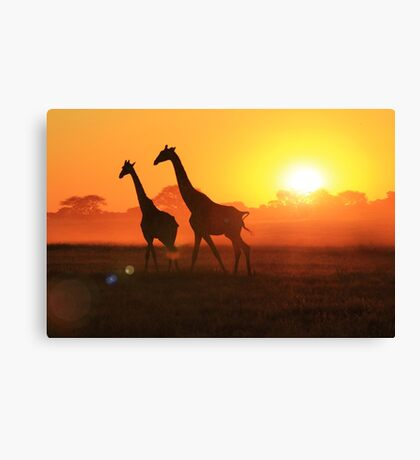 Giraffe - Sunset Gold and Harmony - African Wildlife Canvas Print