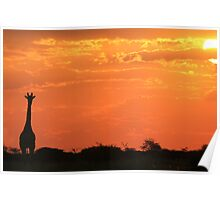 Giraffe - Sunset Gold - African Wildlife and Nature Background Poster