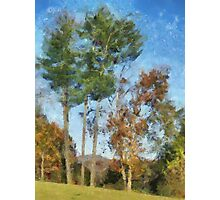 Tall Trees Against A Blue Sky Photographic Print