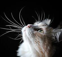 whisker eye by meowscott