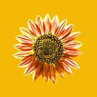 Red sunflower by Justin Spooner