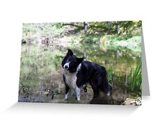 Indy in the pond Greeting Card