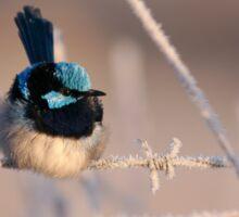 ~ Blue Wren ~ Sticker