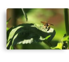 Nomad bee Canvas Print