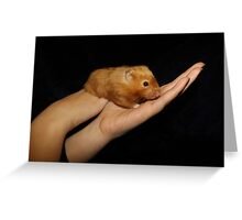Hamster In The Hand Greeting Card