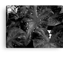 Coleus in B&W Canvas Print