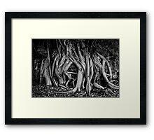 Sensuous Fig Framed Print