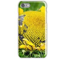 Sunflower picked in summer iPhone Case/Skin
