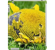 Sunflower picked in summer iPad Case/Skin