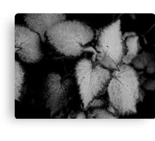 Tiny Leaves-B&W Canvas Print