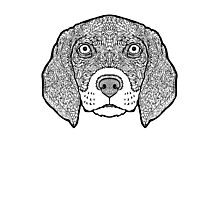 Beagle-Detailed Dogs - Illustration Photographic Print