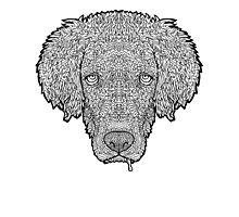 Golden Retriever - Detailed Dogs - Illustration Photographic Print