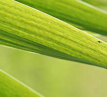 Abstract iris leaf background by Marta Jonina