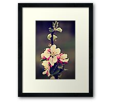 Apple flowers Framed Print