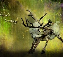 Season's Greetings - Caribou by missmoneypenny