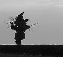 Tree Silhouette. by Billlee