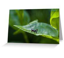 Small black cricket on leaf Greeting Card