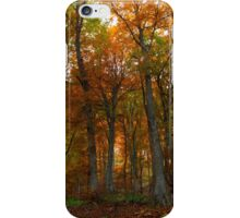 Beautiful autumn colors in the forest iPhone Case/Skin