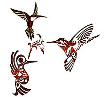 hummingbirds Photographic Print