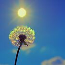 Dandelion Rainbow by bundug