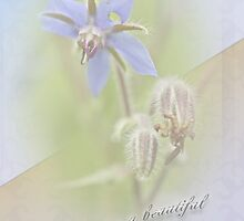 Sister Birthday Greeting Card - Borage - Borage officinalis by MotherNature2