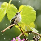 Beautiful Hummingbird in the Rain by Christina Rollo