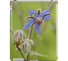 Borage Wildflower - Borage officinalis - Annual Herb iPad Case/Skin