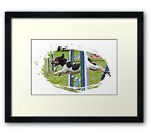 Jack Russel Terrier doing agility Framed Print