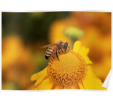 Im a busy bee Poster