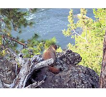 Chuckie on the Rocks Photographic Print
