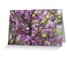 pink wisteria in spring Greeting Card