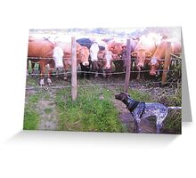 What are you looking at . Greeting Card