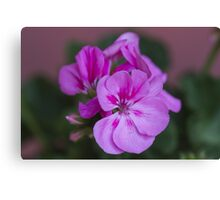 pink flower Canvas Print