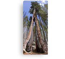 Clothespin Tree 2 Canvas Print