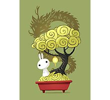 Bonsai Bunny Photographic Print