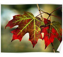 Feeling of Autumn - Maple leaves  Poster