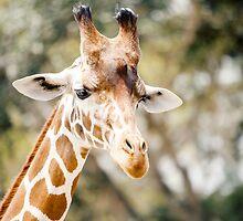Elegant Giraffe by link2sue