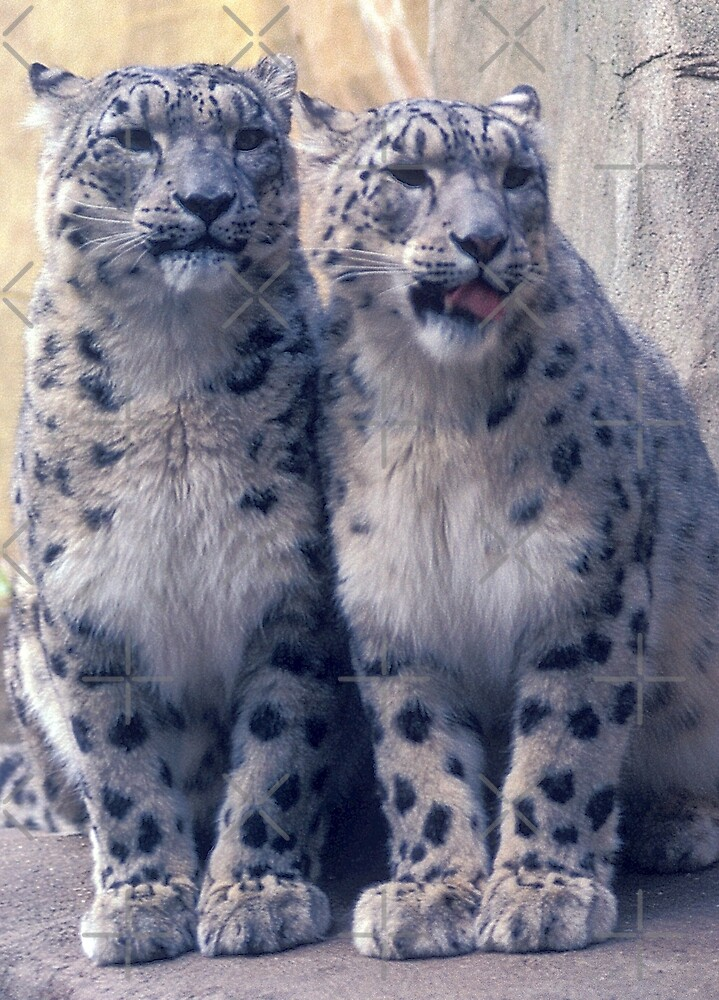 Twin young Snow Leopards by dangerouslyclos