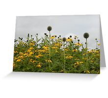 echinops & rudbeckia border Greeting Card