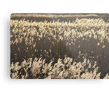 Norfolk Reeds Metal Print